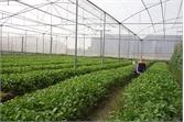 Hiệu quả từ quỹ hỗ trợ nông dân