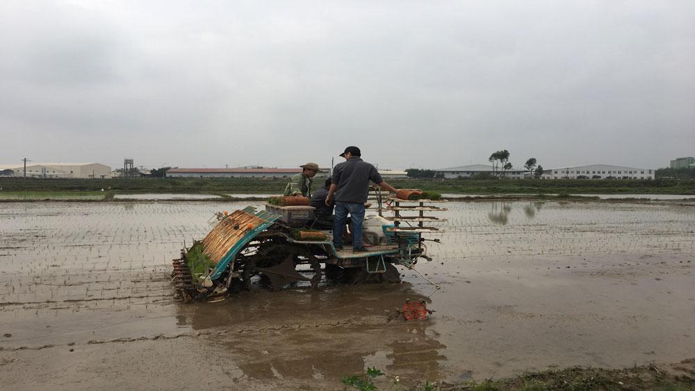 Trình diễn máy cấy lúa, bón phân và phun sâu tự động Kubota