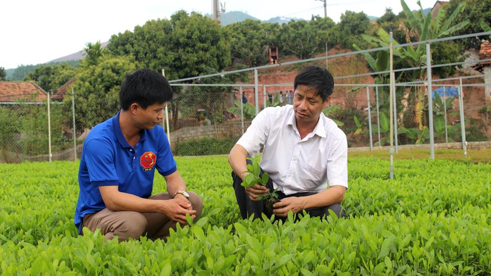Sản xuất giống cây bằng bầu hữu cơ: Giảm nhân công, không ô nhiễm môi trường