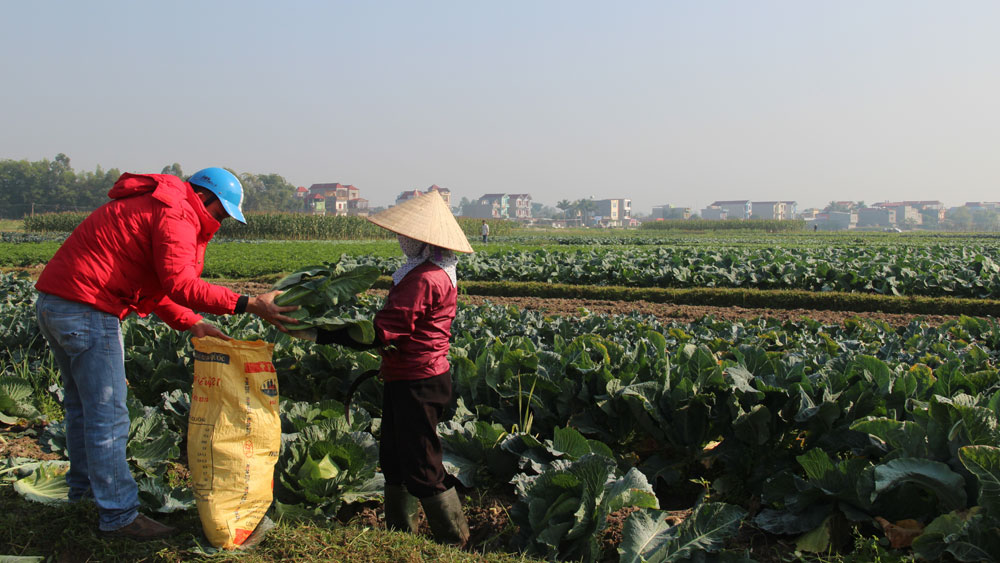 Duy trì 25 mô hình sản xuất nông nghiệp hàng hóa