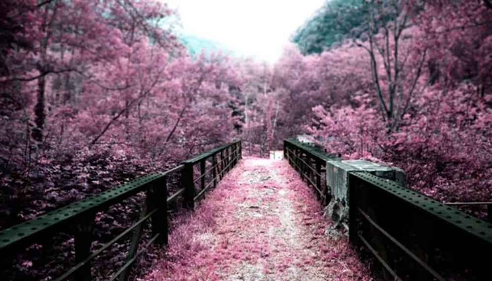 Hoa anh đào, lãng mạn, đẹp, địa điểm lý tưởng