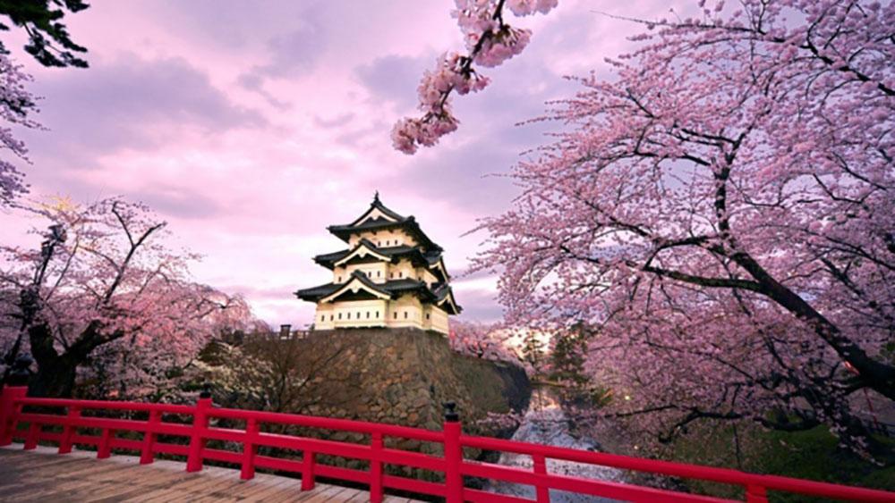 Những địa điểm ngắm hoa anh đào đẹp nhất trên thế giới