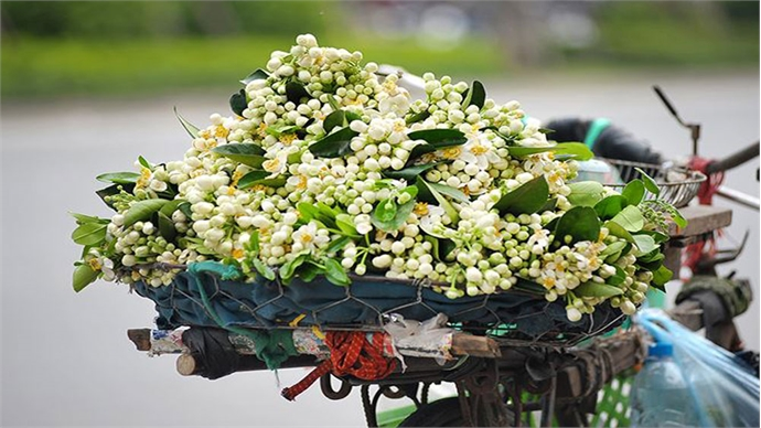 Take the amazing scent of spring home with you in Hanoi