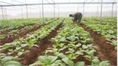 Giá trị sản xuất một ha đất nông nghiệp tăng 5 triệu đồng
