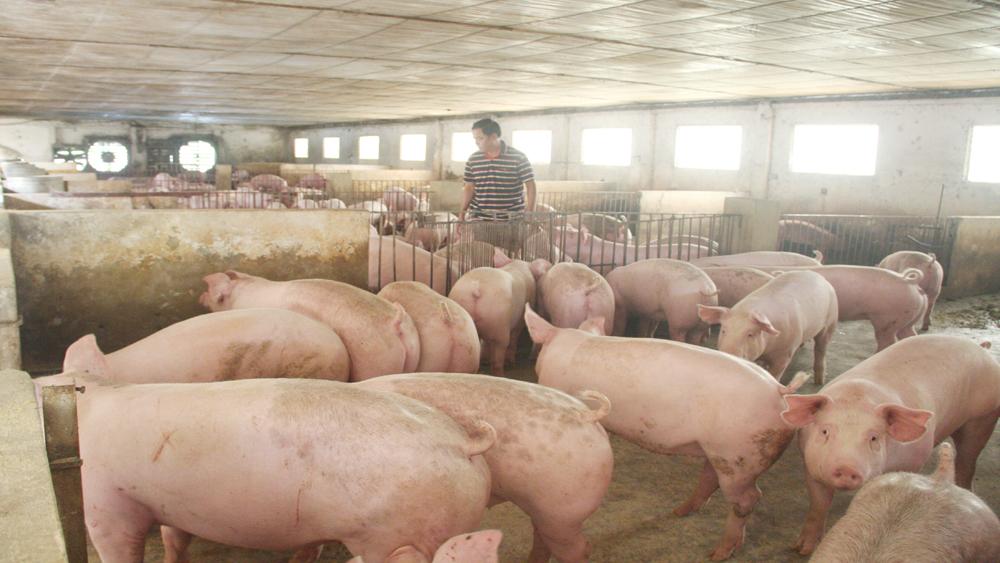 Không để xảy ra dịch bệnh trên đàn vật nuôi