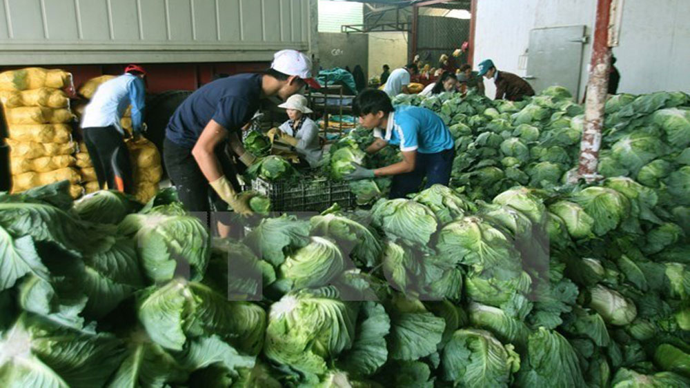 Vietnam targets 4.5 billion USD from farm produce exports by 2020