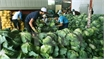 Vietnam targets 4.5 billion USD from farm produce exports by 2020
