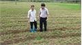 Yên Thế trồng gần 1,1 nghìn ha lạc xuân