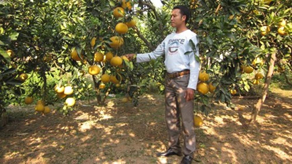 Hỗ trợ hơn 340 triệu đồng trồng bưởi