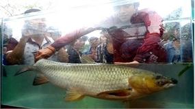 Đến di sản Phong Nha xem thi kho cá