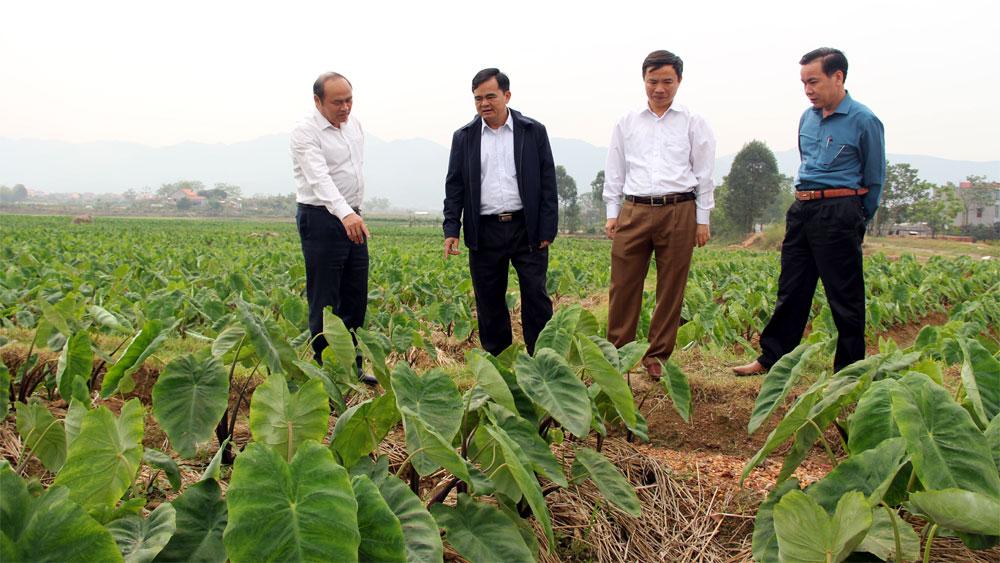 Chủ tịch UBND tỉnh Nguyễn Văn Linh khảo sát thực tế tại huyện Lục Nam