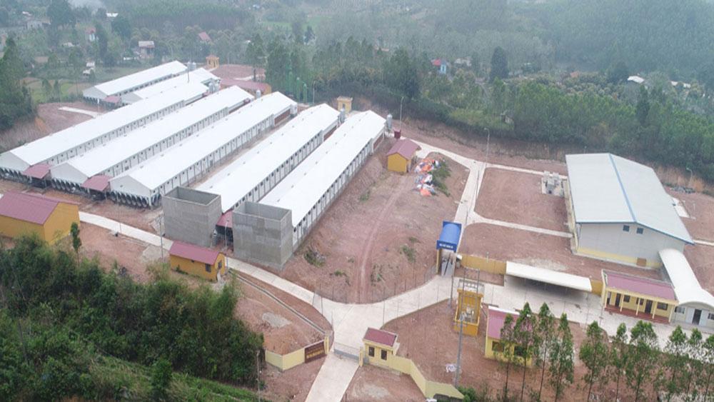 Bac Giang develops trademark of Yen The hill chicken