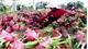Từ ngày 1-4, hoa quả Việt Nam xuất khẩu sang Quảng Tây (Trung Quốc) sẽ bị truy xuất nguồn gốc