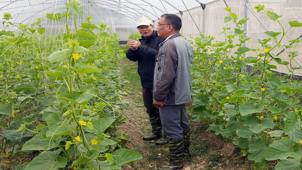 Annual supply contract of VietGAP agricultural products inked
