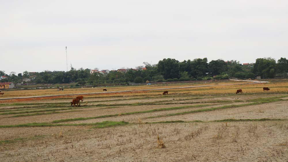 Nhất trí điều chỉnh, bổ sung một số vị trí trong quy hoạch sử dụng đất đến năm 2020