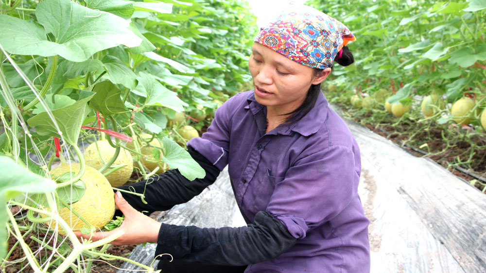 Bac Giang builds over 20 net houses growing vegetables and flowers