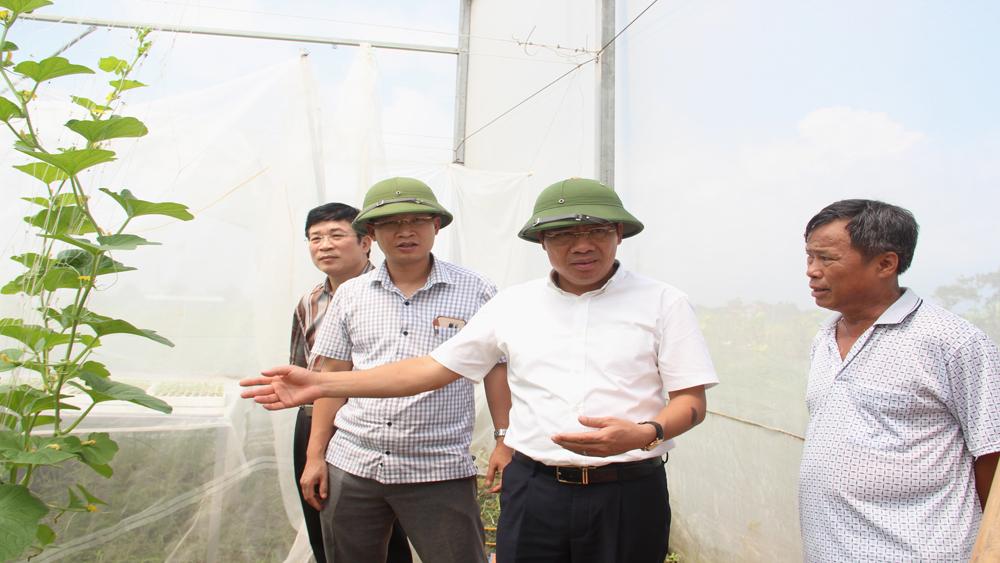 Hiệp Hòa: 3 mô hình nông nghiệp ứng dụng công nghệ cao được hỗ trợ