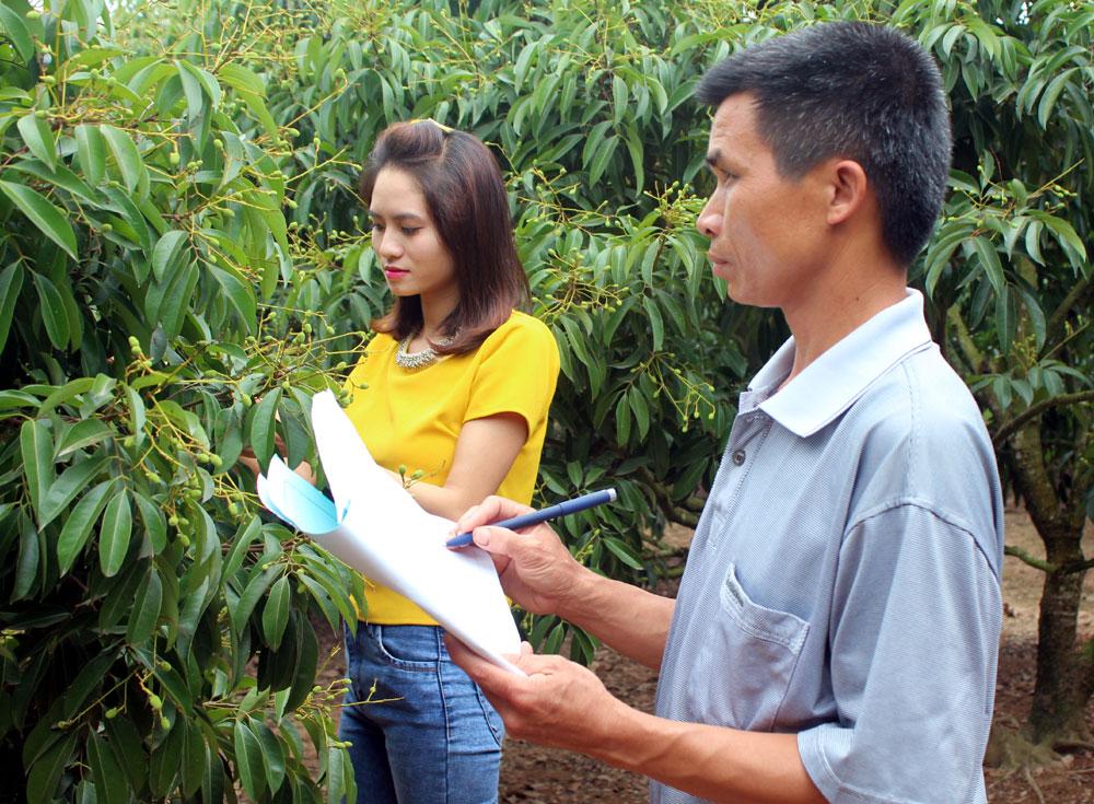 Anh Nguyễn Văn Lưu, thôn Kép 1, xã Hồng Giang (Lục Ngạn) ghi nhật ký chăm sóc vải thiều.
