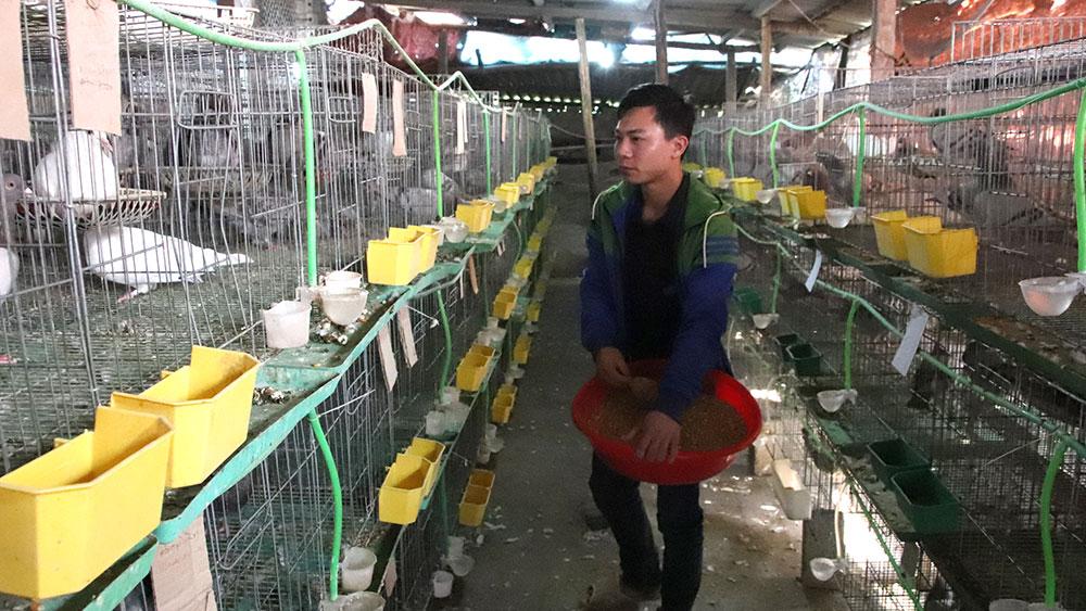 nuôi bồ câu, lãi 15 triệu, mỗi tháng, Lưu Văn Bằng