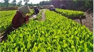 Gieo, ươm giống cây lâm nghiệp bằng bầu hữu cơ siêu nhẹ: Giảm nhân công, thân thiện với môi trường