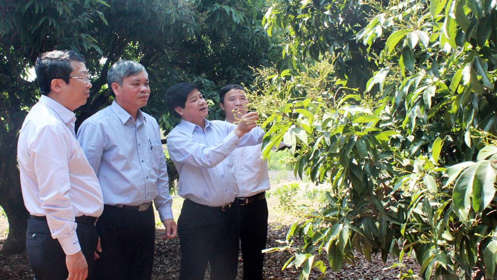 Đồng chí Lê Quốc Doanh, Thứ trưởng Bộ Nông nghiệp và PTNT (thứ 2 bên phải) thăm vùng vải thiều VietGAP tại xã Hồng Giang (Lục Ngạn).