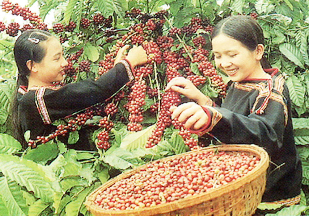 Central Highlands localities, higher income, fruits cultivation, high-demand fruits, perennial fruit trees