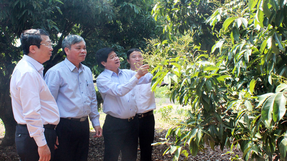 Deputy Minister works with Bac Giang's leader to facilitate VietGAP certificate issuance