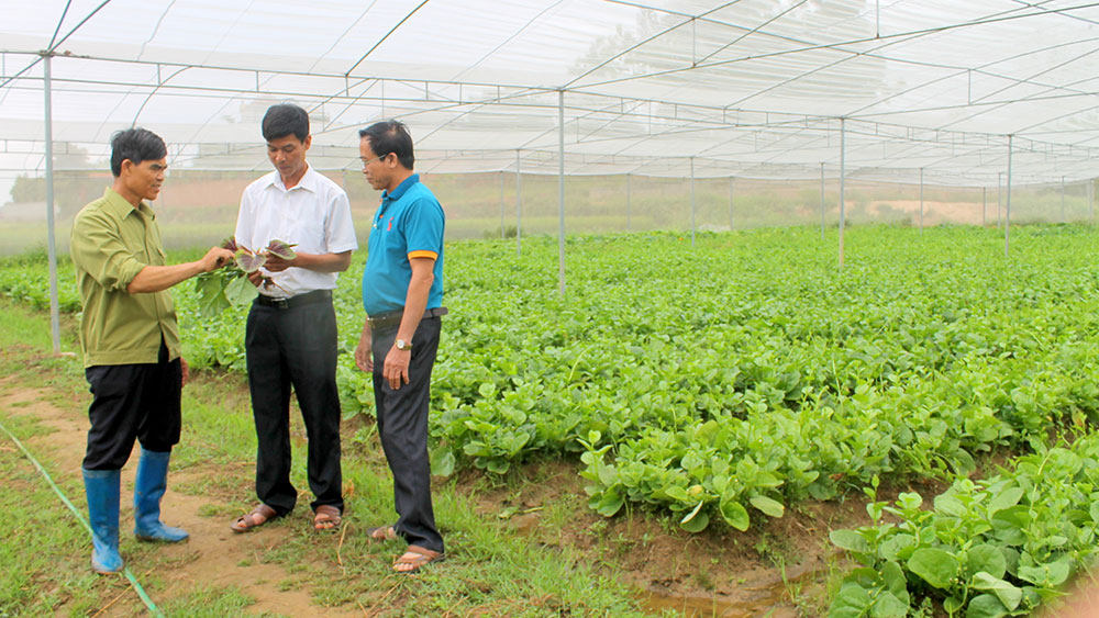 Bac Giang expands area of VietGAP production to raise farm produce quality