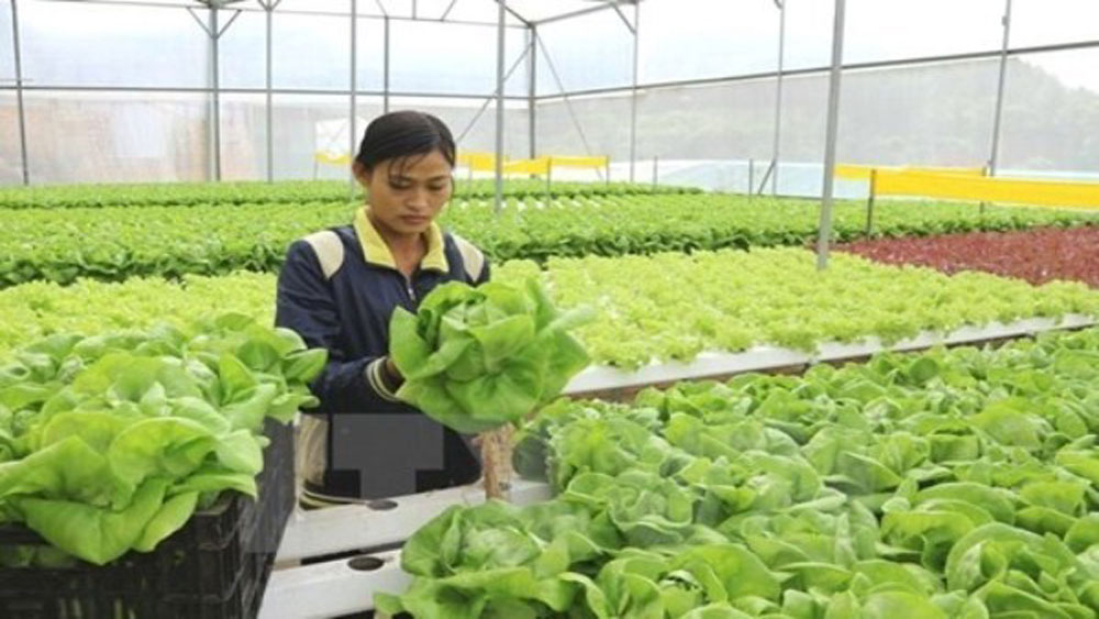 Ho Chi Minh City supports agricultural start-ups