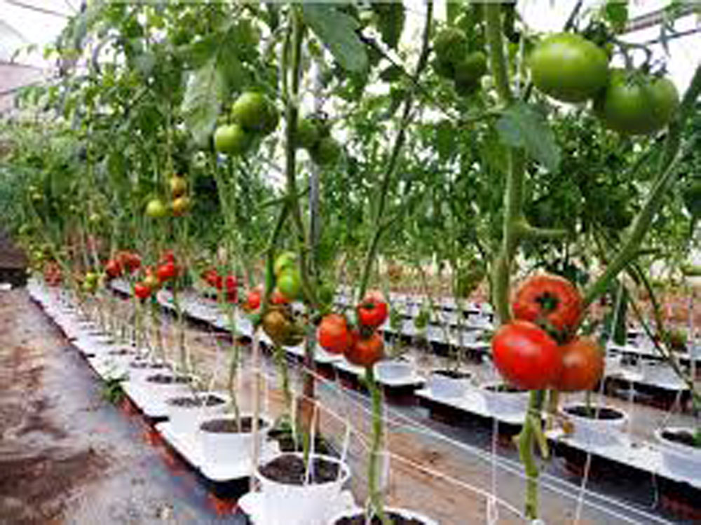 Ho Chi Minh City, agricultural start-ups, Incubating Vietnamese businesses, young agricultural firms, modern technology, clean and safe farming,  preferential loans