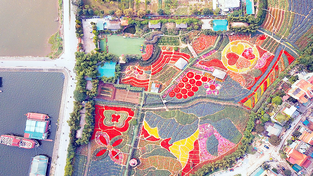 Shining bright: Flower fields blossom in heart of Vietnam's capital