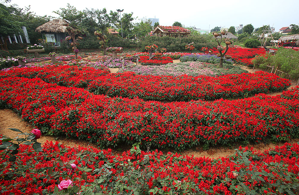 Shining bright, Flower fields, Vietnam's capital, Hanoi, biggest lake, beautiful site