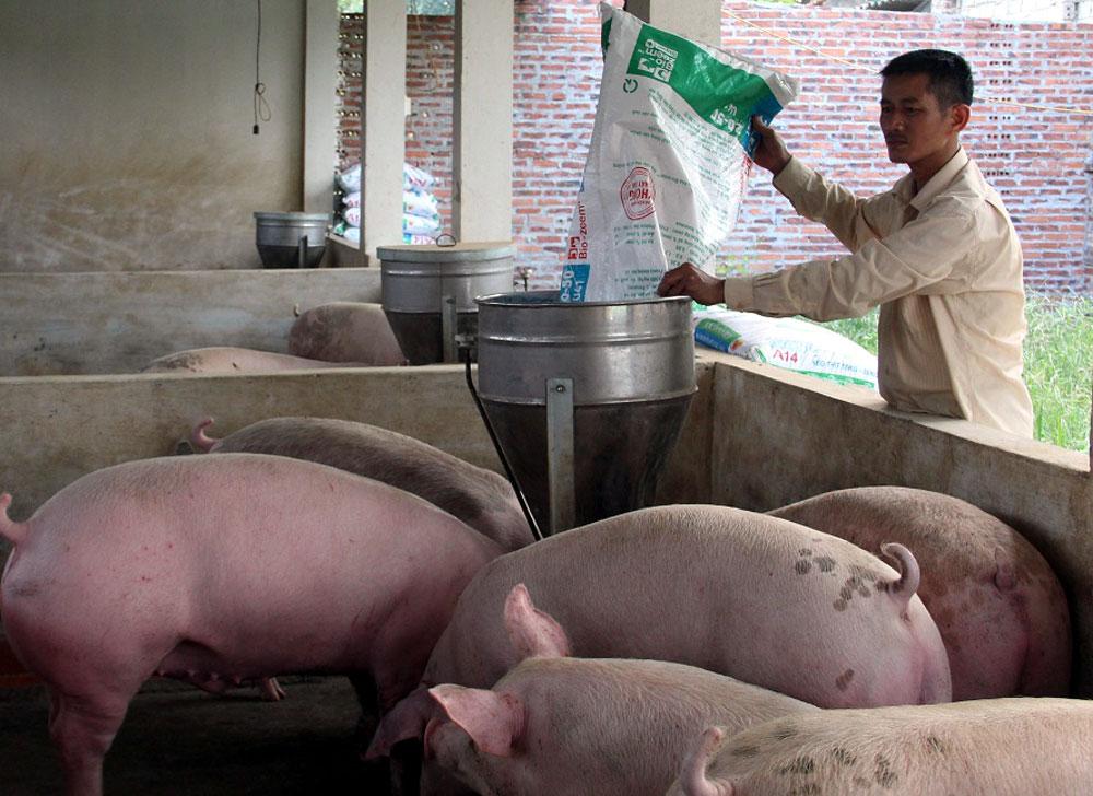 Giá lợn hơi,  tăng cao, đạt 37 - 40 nghìn,   tiêu thụ,  lợn sạch,  Tân Yên, bắc giang