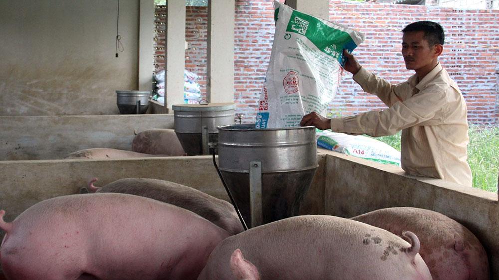 Giá lợn hơi tăng cao, đạt 37 - 40 nghìn đồng/kg