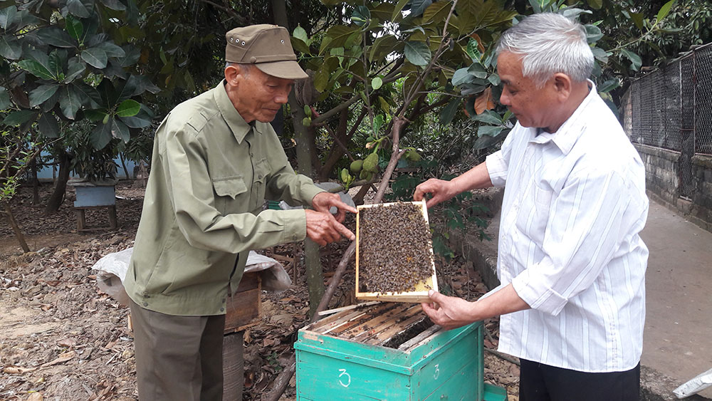 Nuôi ong, tăng thu nhập, CLB nuôi ong