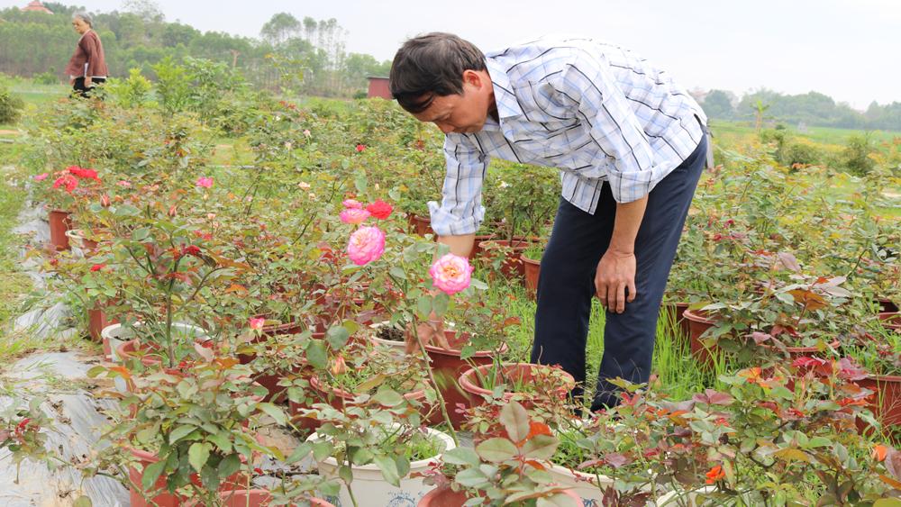 Những nông dân năng động làm kinh tế giỏi ở Song Mai
