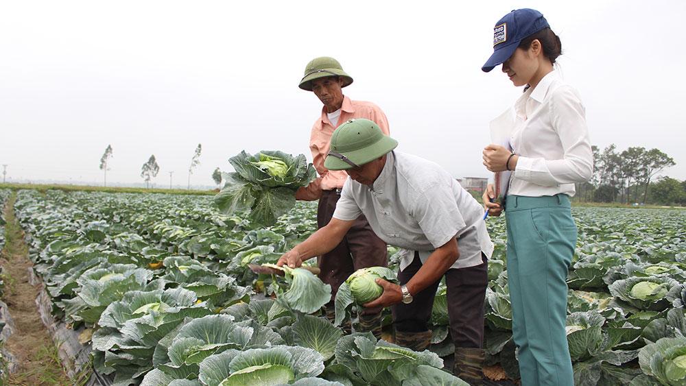 Cán bộ HTX Rau sạch Yên Dũng trao đổi kỹ thuật chăm sóc rau với nông dân.