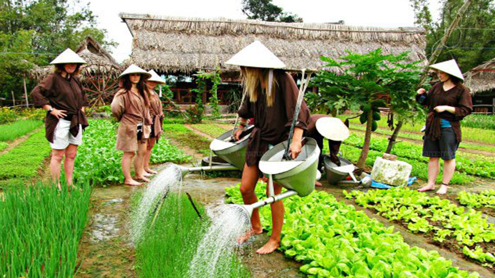 Vietnam, agritourism, massive potential, rice civilization, population living, rural areas, positive mutual benefit, Agricultural activities,  tourism growth, agriculture sectors