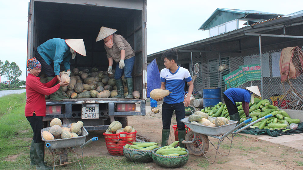 Yen Dung develops safe vegetable brand