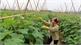 Mở rộng liên kết, đưa nông sản xuất ngoại