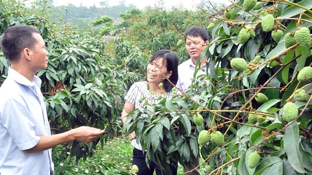 Tân Yên: Hơn 200 ha vải sớm theo tiêu chuẩn VietGAP