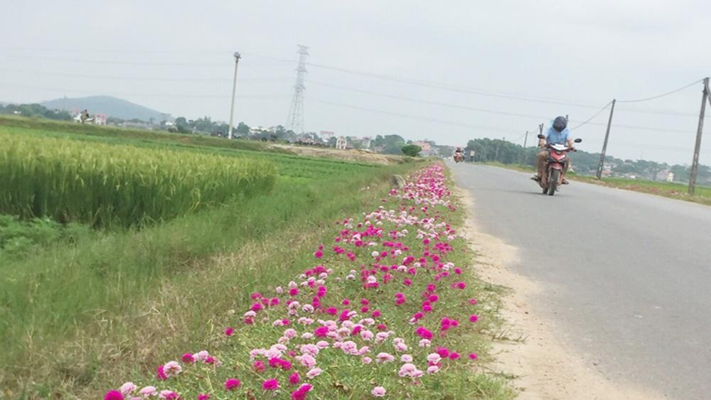 Hiệp Hòa thêm 18 km đường hoa