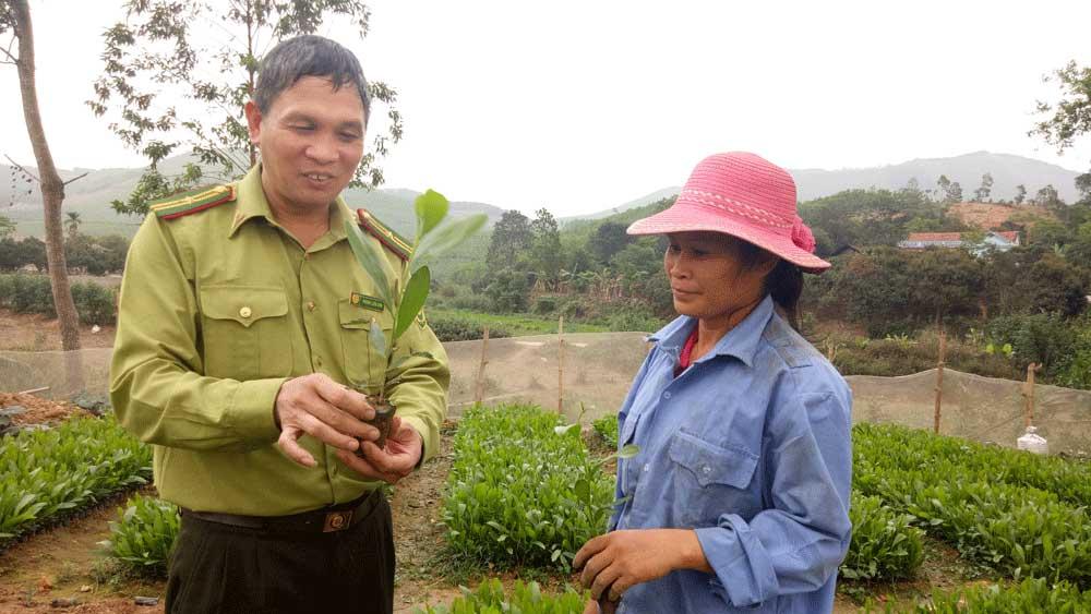 Phấn đấu hoàn thành trồng rừng trong tháng 7-2018