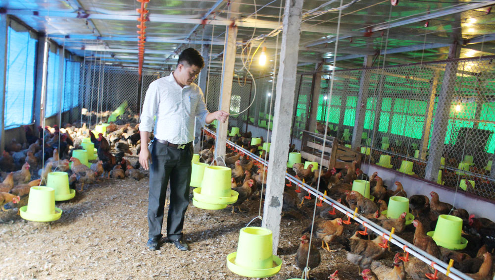 Yen The district, Bac Giang province, hill chicken, value chain, huge flock, protected trademark, fluctuating consumption, output stabilization, breeding cooperative, veterinary medicine, collective trademark
