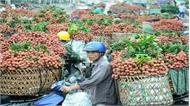 Cơ hội tuyệt vời để xuất khẩu vải thiều sang Nhật Bản, Hàn Quốc