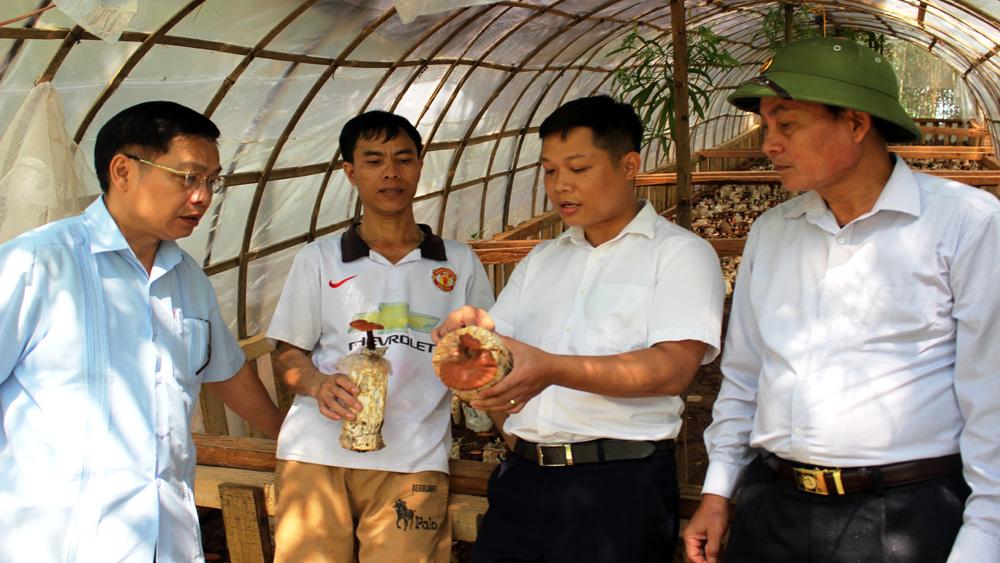 Ban Chỉ đạo Phát triển kinh tế tập thể tỉnh làm việc tại huyện Sơn Động