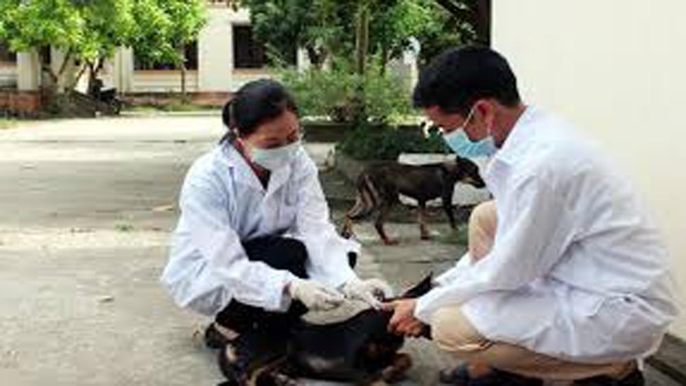 Tăng cường phòng, chống bệnh dại động vật