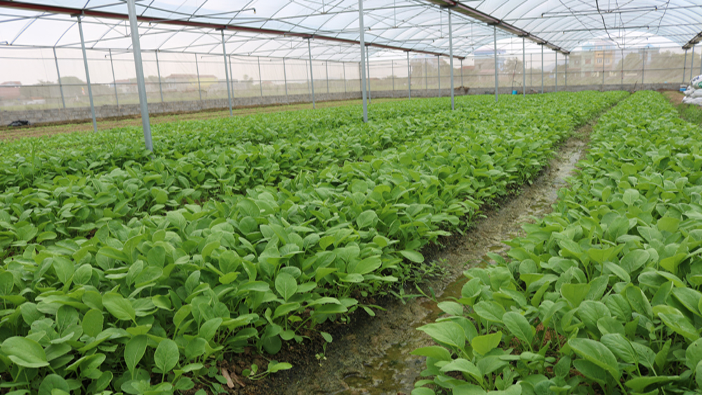 Triển khai, xây dựng, mô hình, nông nghiệp, ứng dụng công nghệ cao