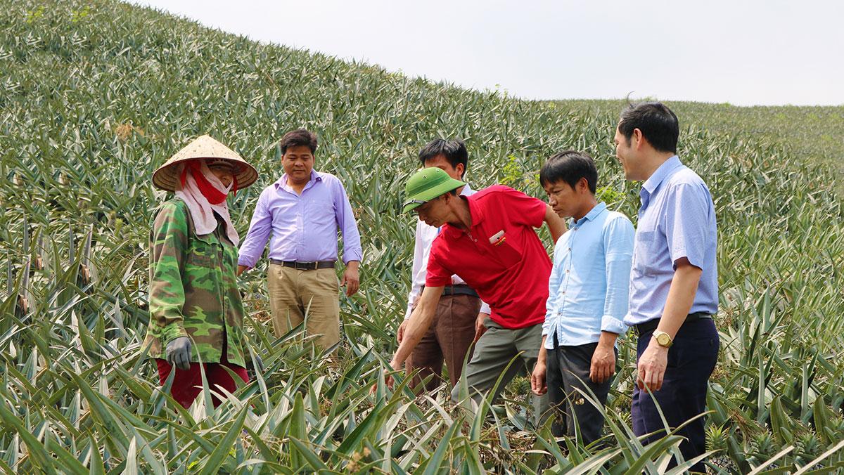 Với lợi thế diện tích đất đồi rất thích hợp cho cây dứa Queen phát triển, chất lượng quả ngon nên dứa Bảo Sơn (Lục Nam) đã được Cục Sở hữu trí tuệ (Bộ KH-CN) công nhận nhãn hiệu hàng hóa tập thể.