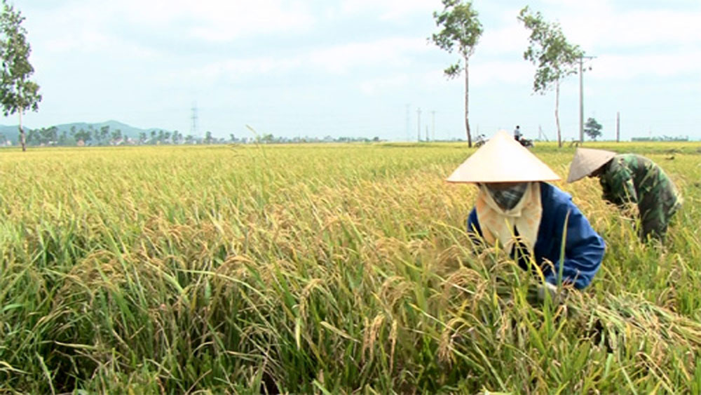 Bac Giang: 3 products to be elected as national typical agriculture produces